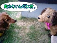 犬太郎と草犬