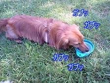 がぶ飲み犬太郎