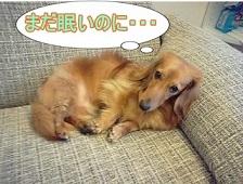 眠たい犬太郎