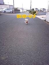 走るちゃんこ