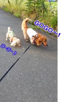 GOGO~