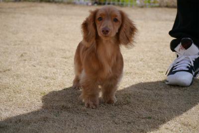 puppy2-fb64a.jpg