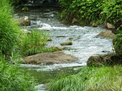 今日の梅田川上流端より上流(川?)