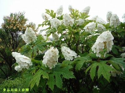 kashiwaba_2014060714262947c.jpg