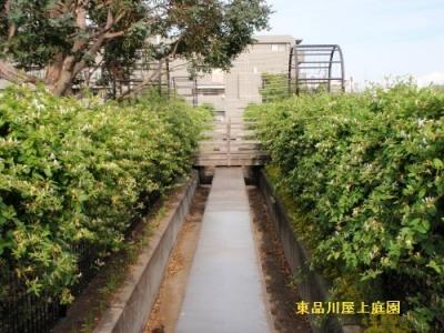 suikazura1_20140518160426e54.jpg