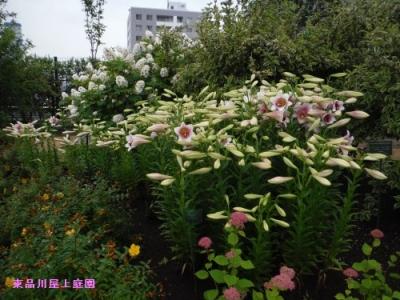 yuri_201406111622035d9.jpg