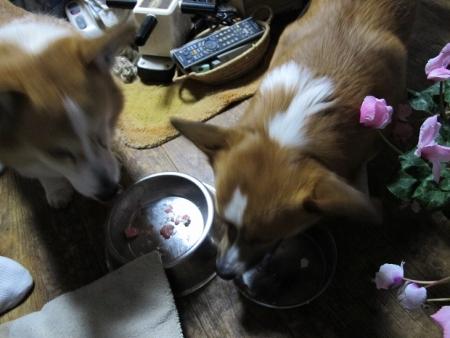 ケーキと犬