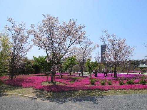 浜名湖花博2014 芝桜エリア