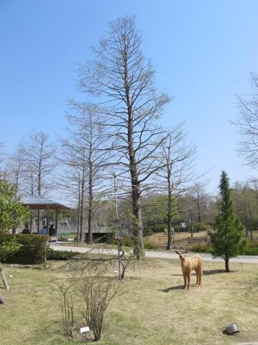 浜名湖花博2014 シカ