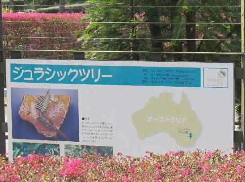 浜名湖花博2014 ジュラシックツリー
