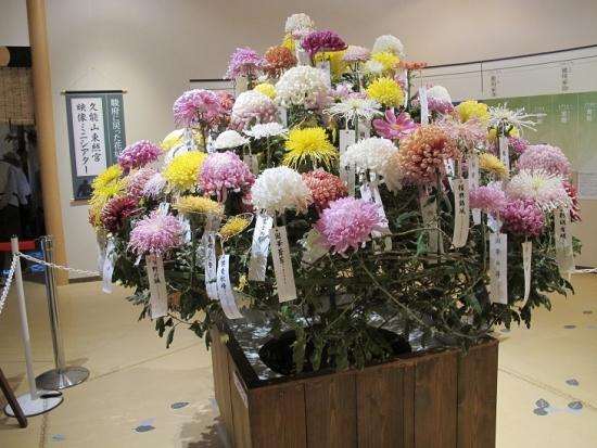 浜名湖花博 百種接分菊