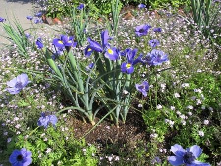 浜名湖花博 花美の庭