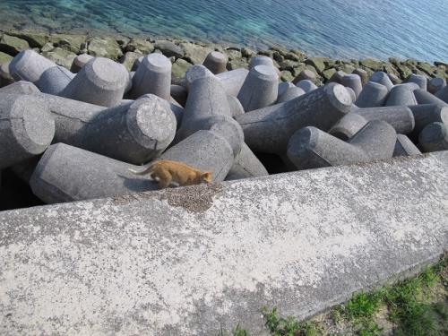 石垣島 ぬこ