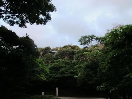 石垣島 バンナ岳 PM7時