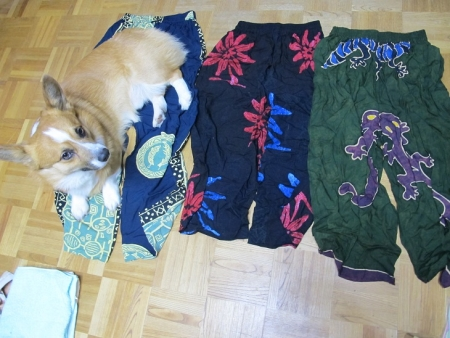 波照間パンツと犬