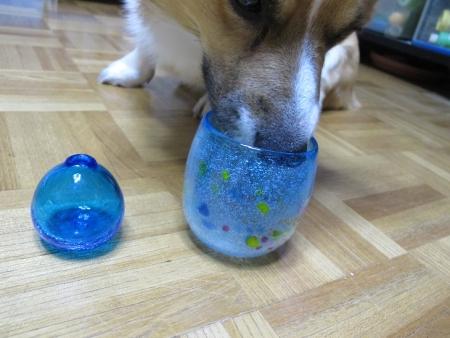 琉球ガラスと犬