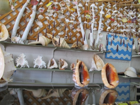 貝殻屋さん