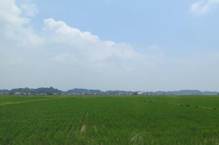 森町 田んぼ