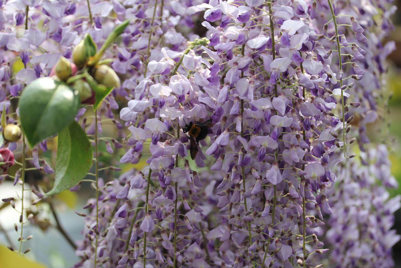 2014・5園 ●Sフジに蜂