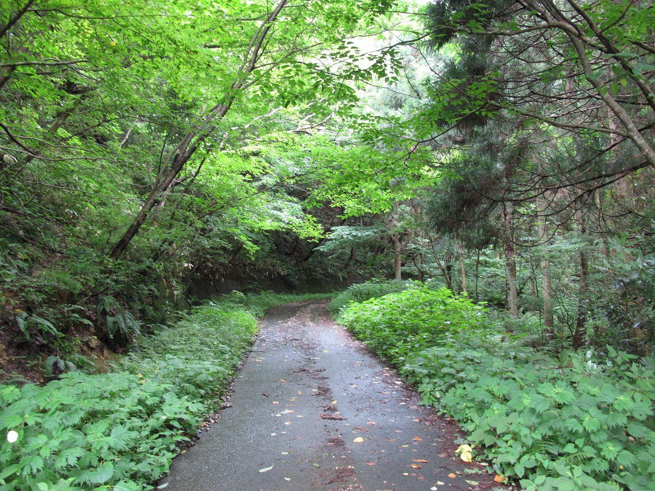 ●S2014・7・17園滝G_17yp6