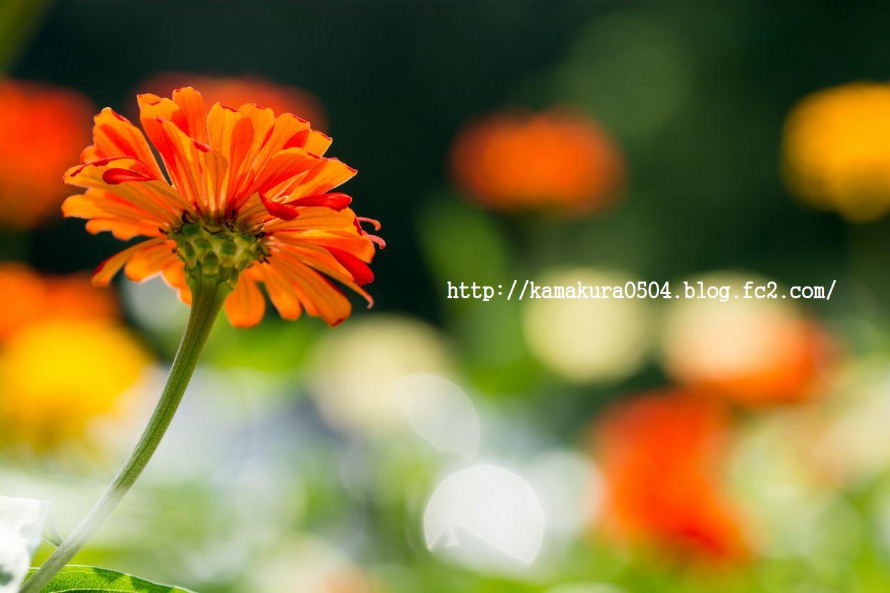 DSC_0057LR_blog_20130816_tam9.jpg