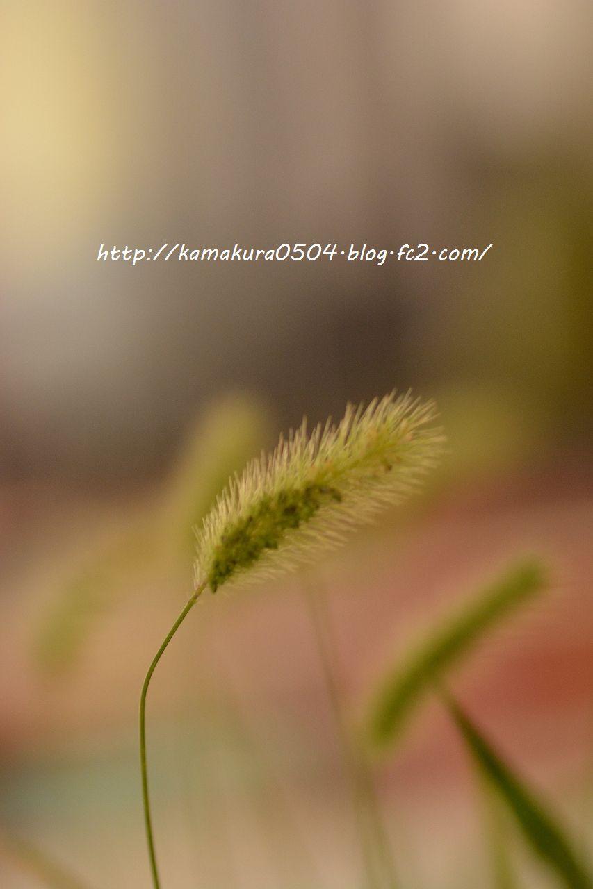 DSC_0076_blog_20130822_tam9.jpg