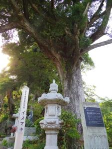 長谷寺(飯山観音)5