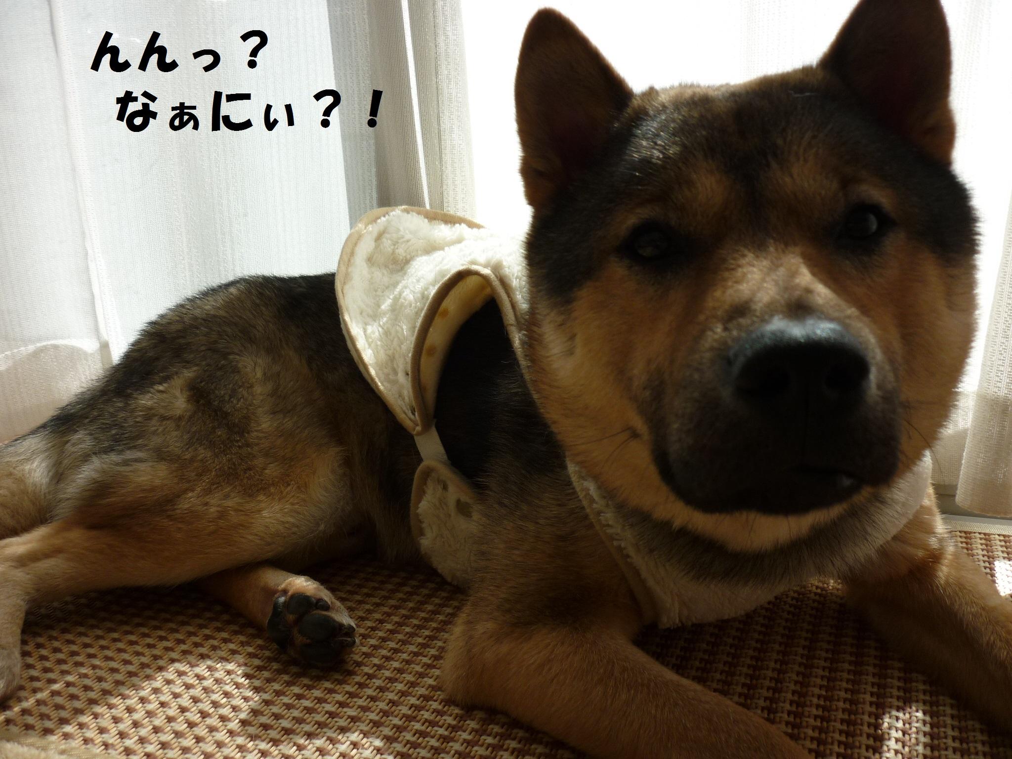 武四郎まつり2014-カムイ
