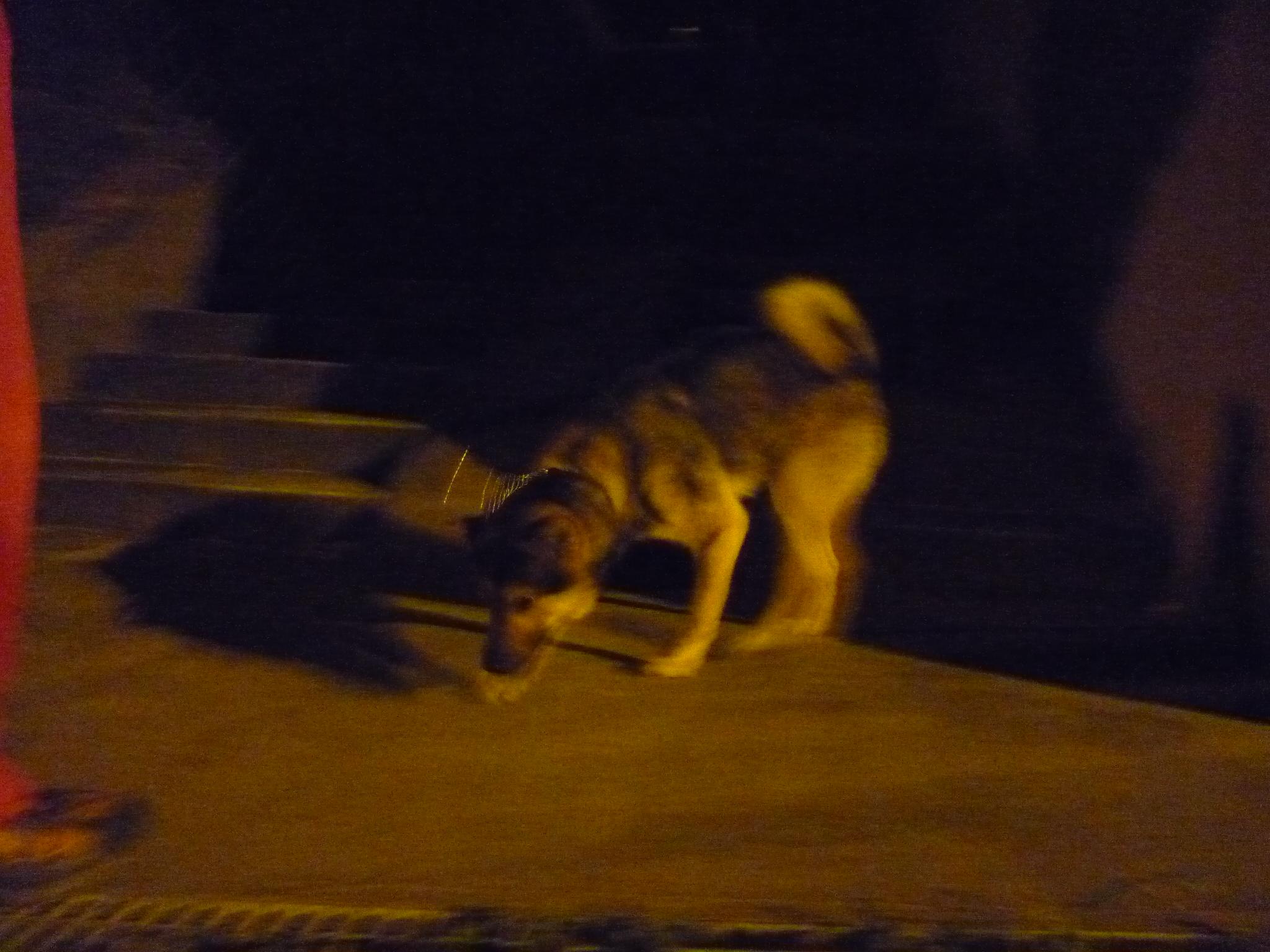 20140403夜散歩01