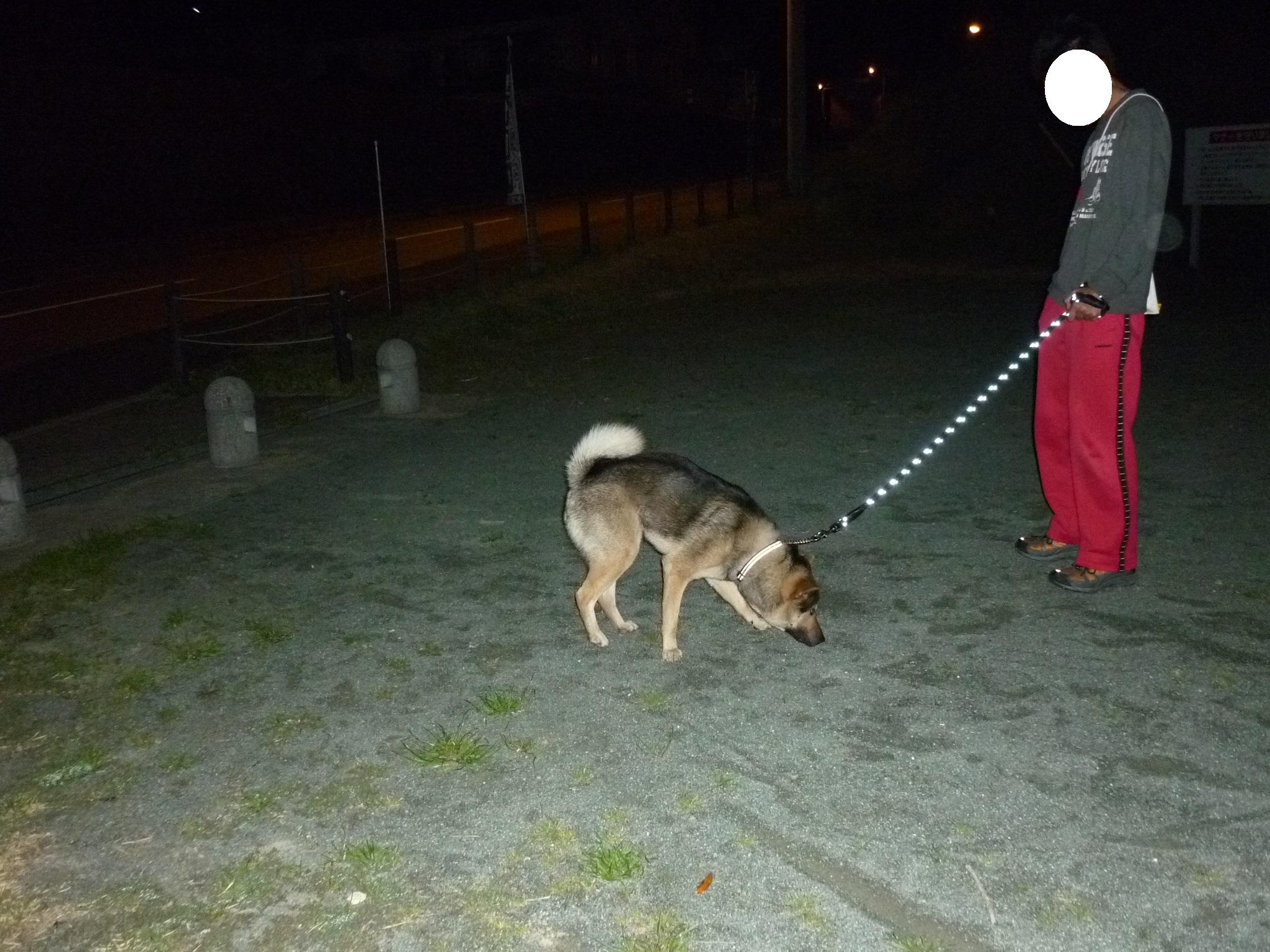 20140403夜散歩03