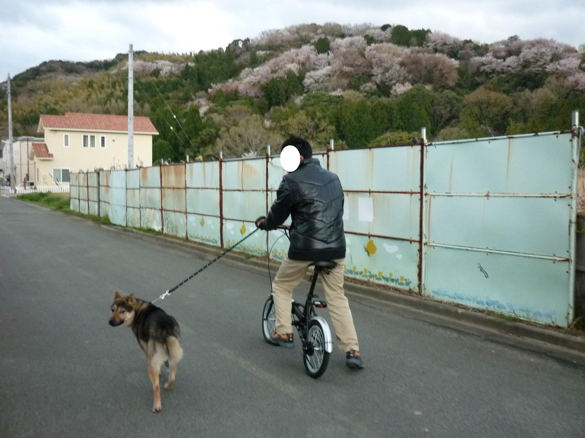 初チャリ散歩01