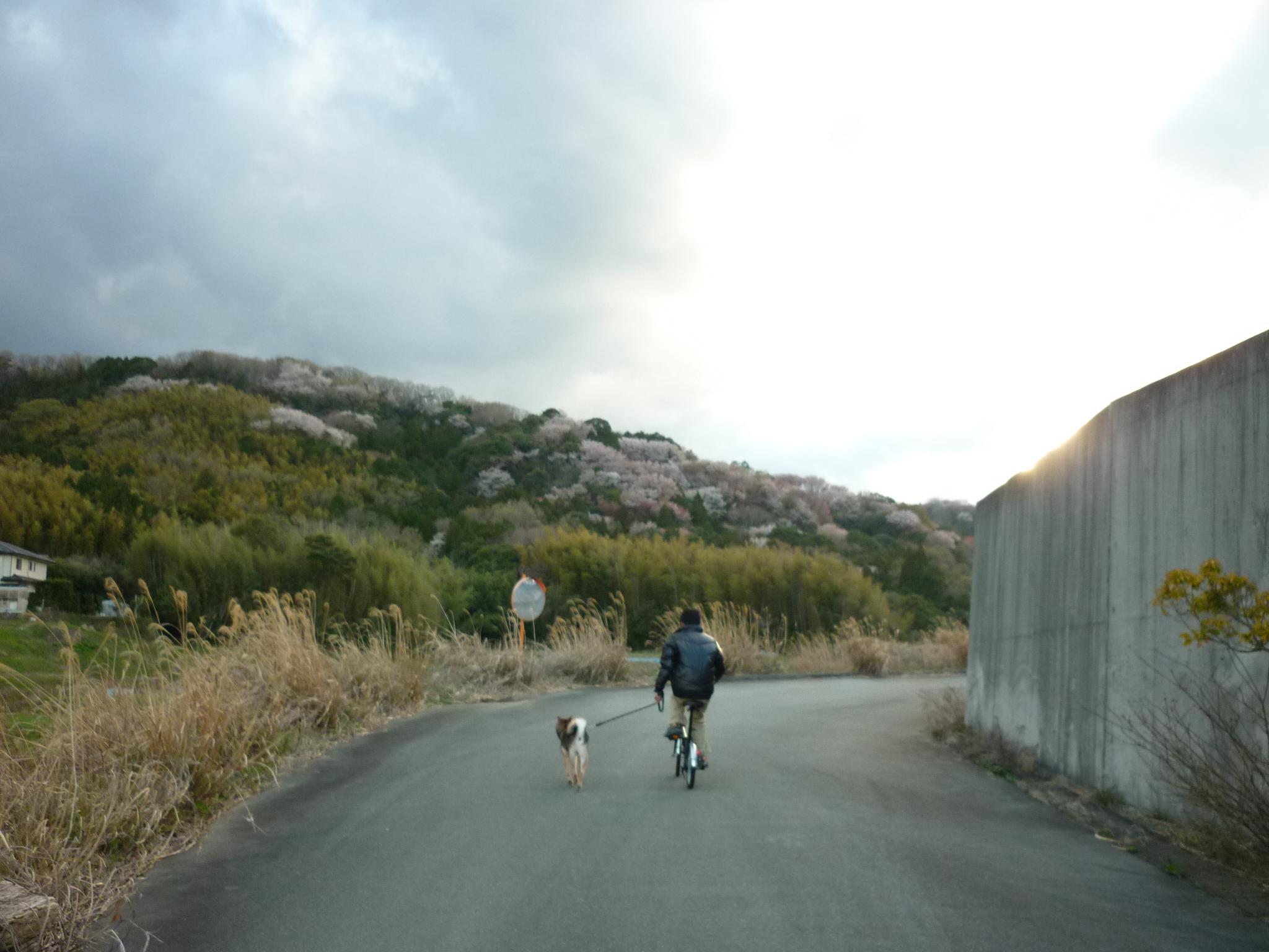 初チャリ散歩06