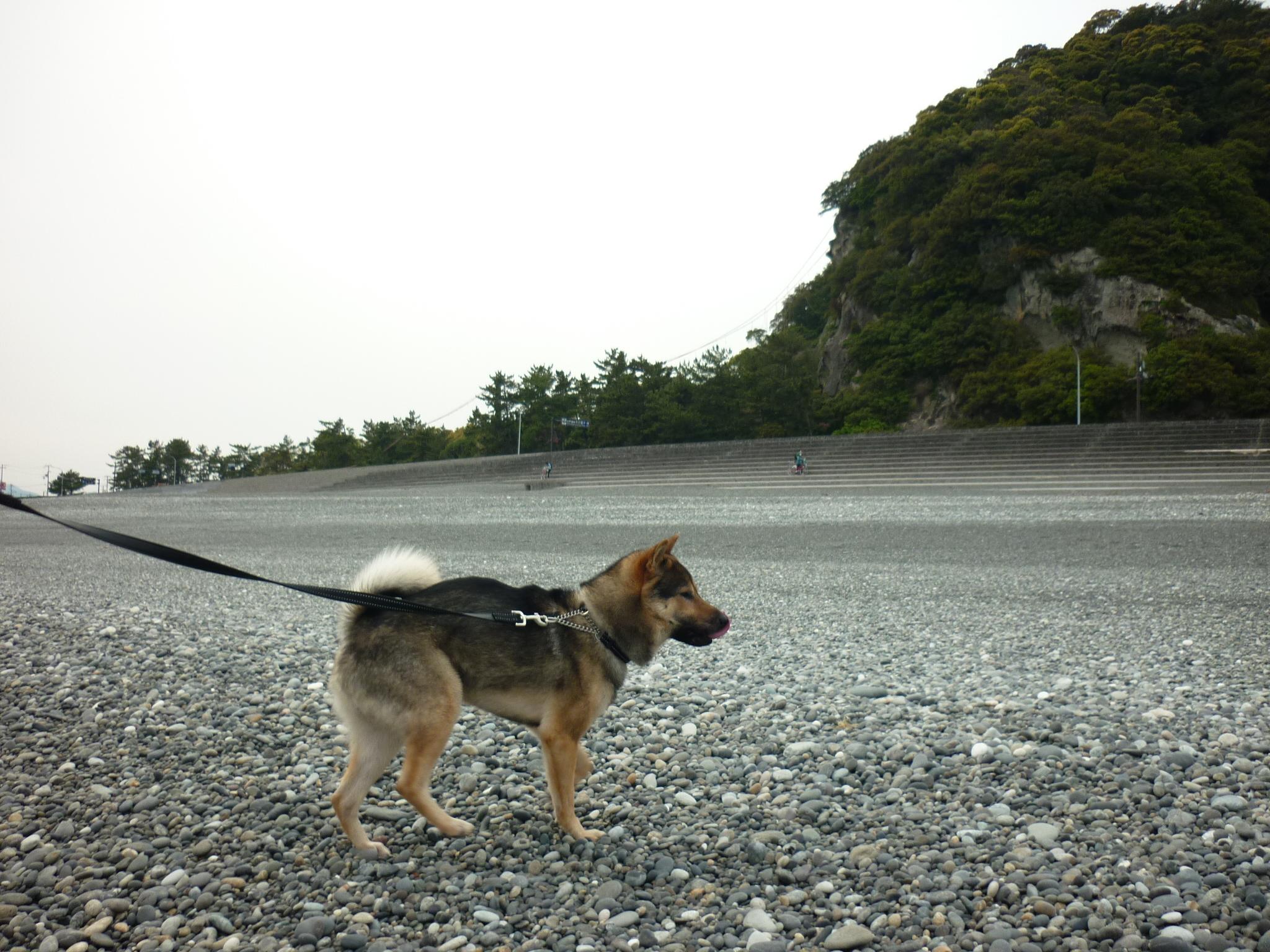 201404熊野33