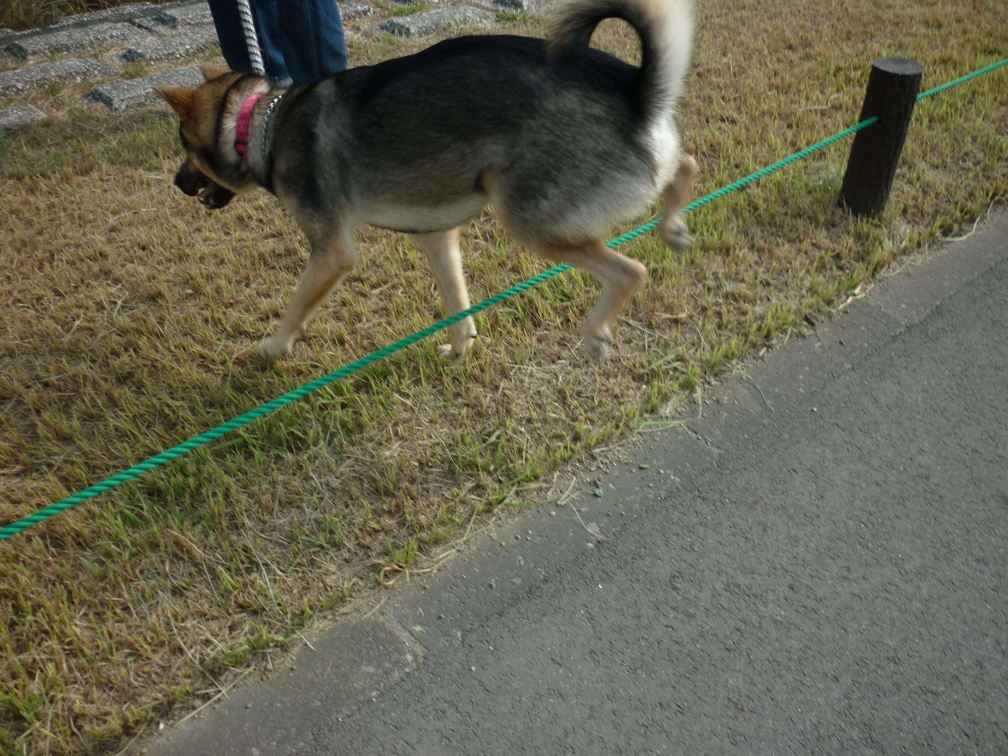 ダイジェスト14-木曽三川公園12