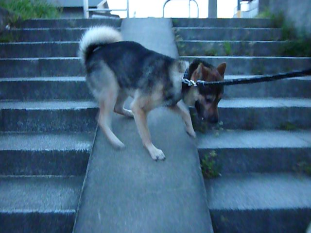 201404-階段バックのぼり09