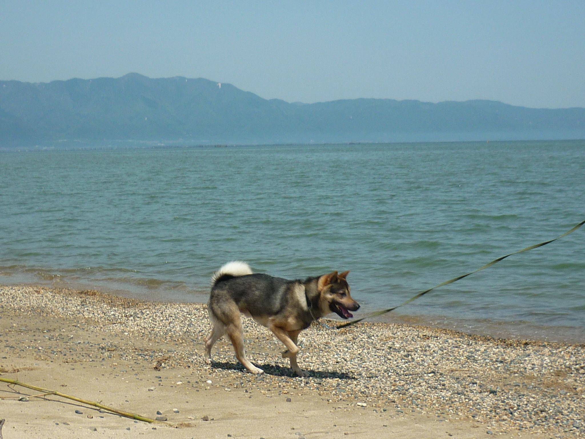 琵琶湖③-07