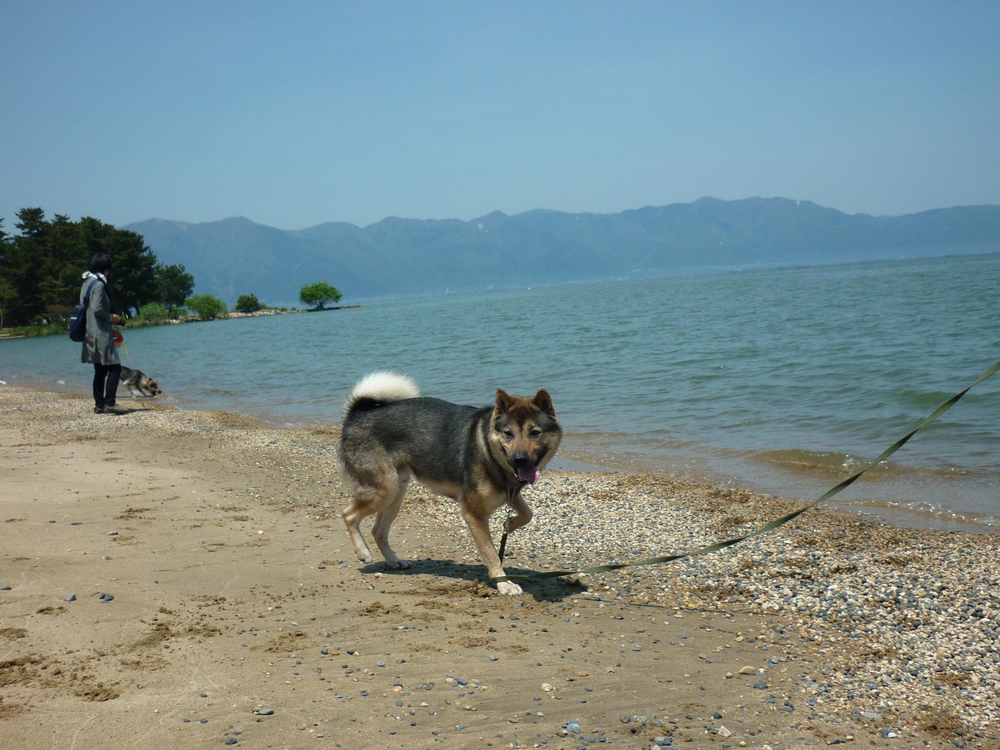 琵琶湖③-09