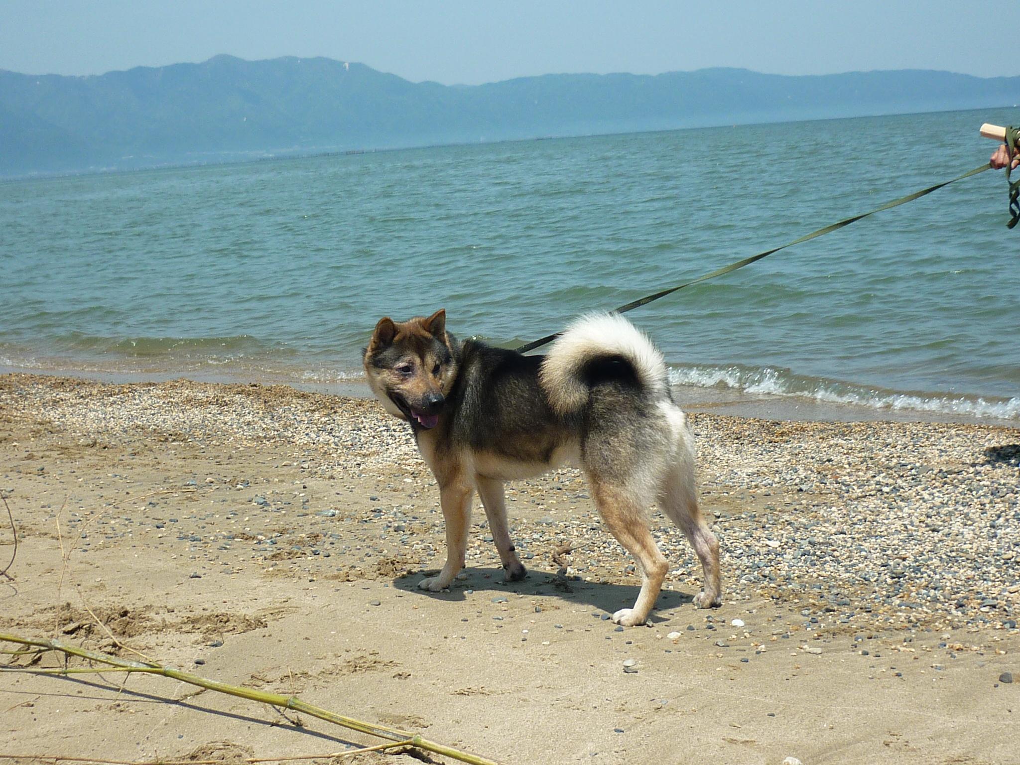琵琶湖③-11