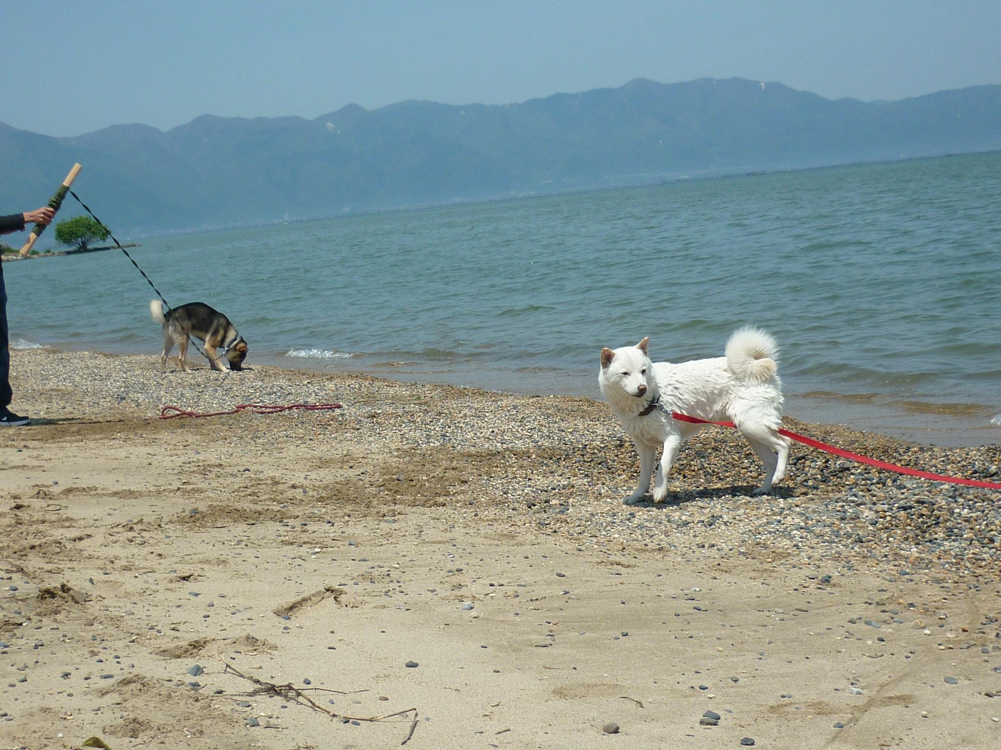 琵琶湖③-15
