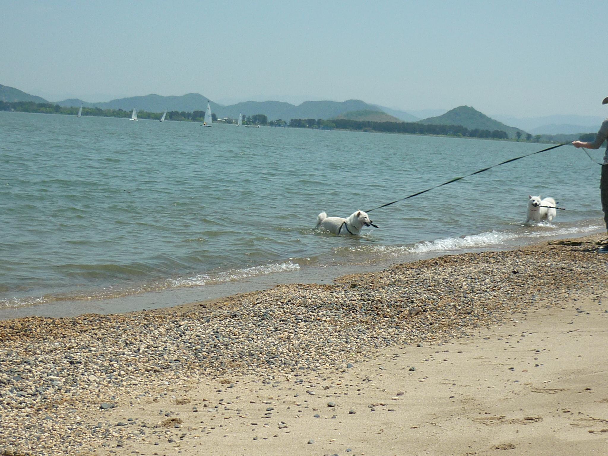 琵琶湖③-16