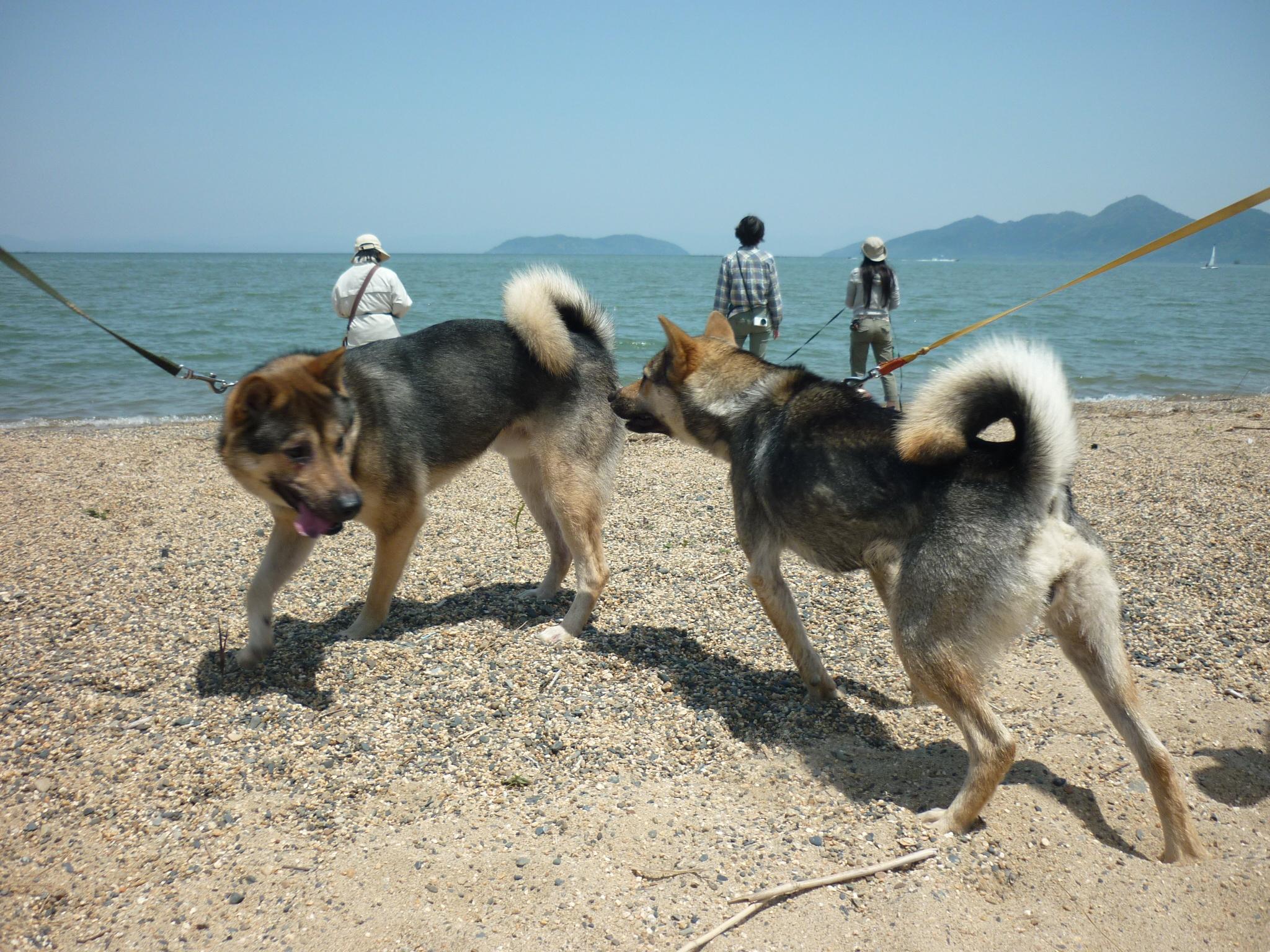 琵琶湖⑥-再会13