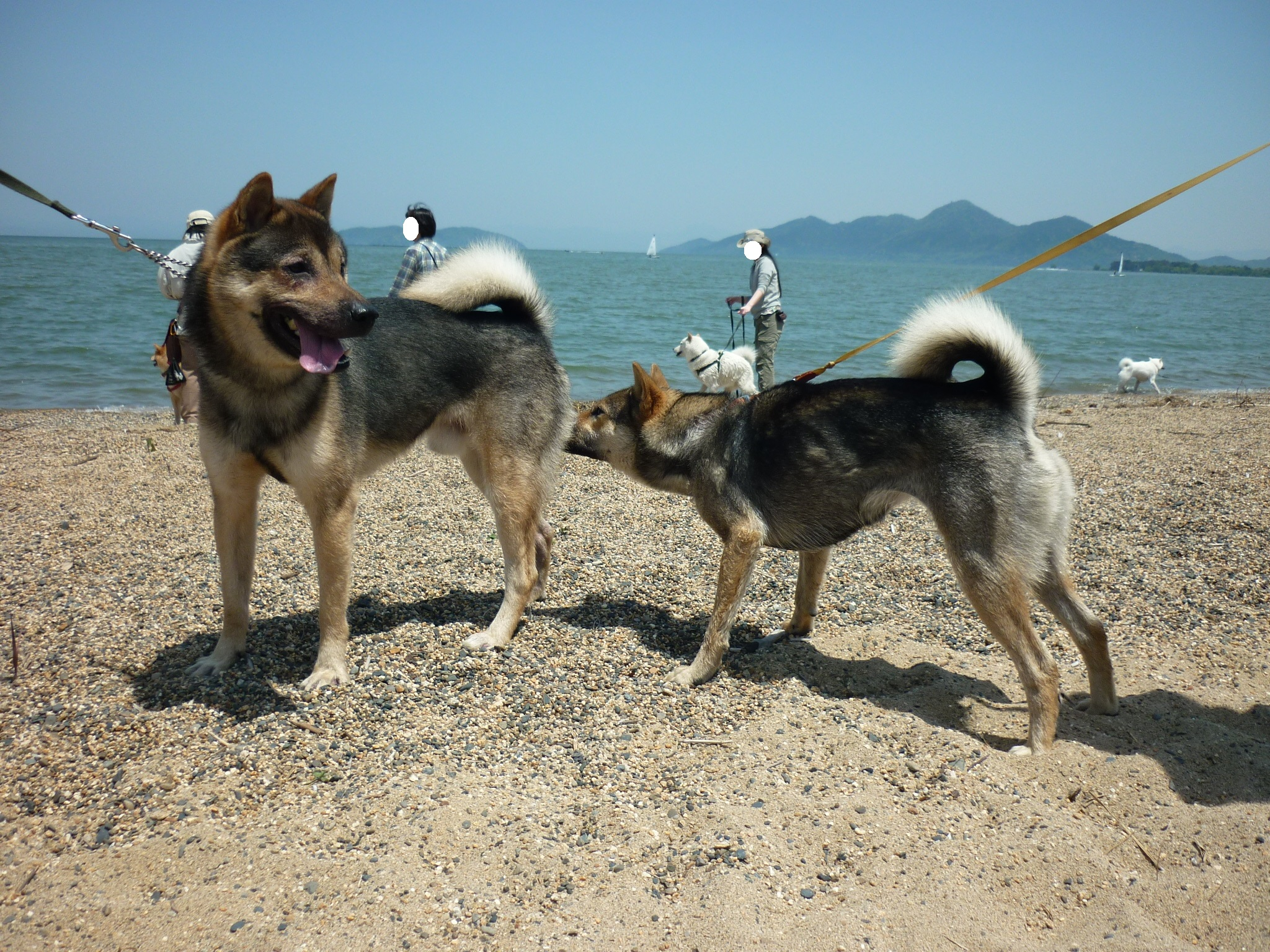琵琶湖⑥-再会14