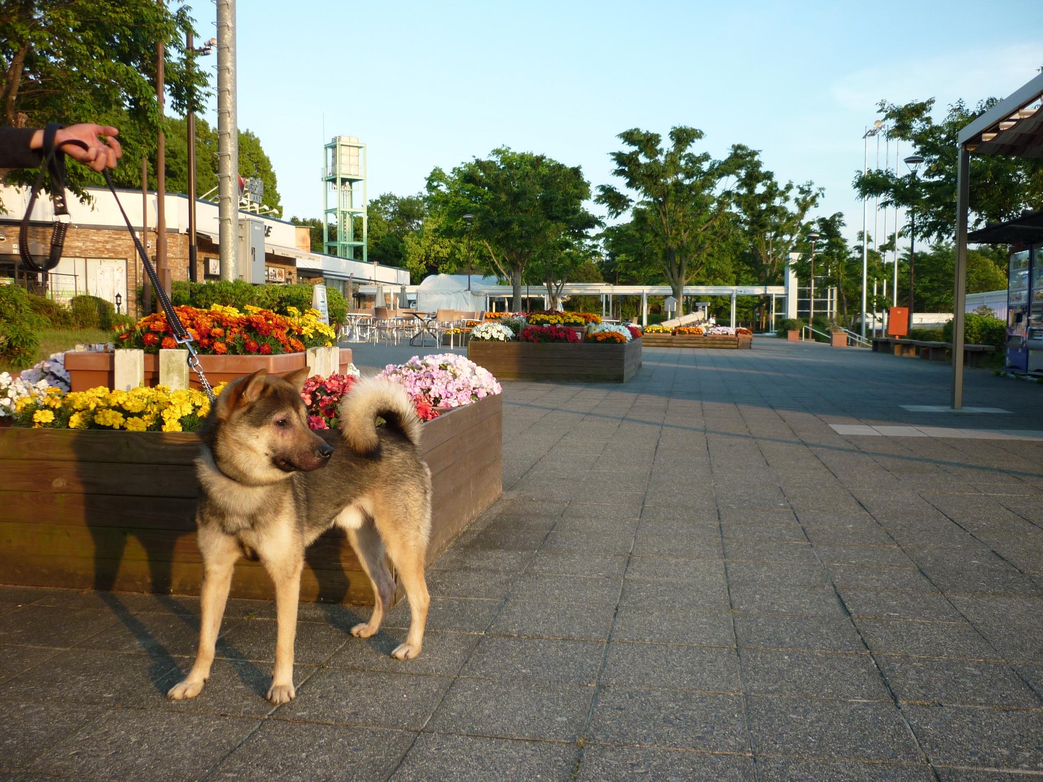 琵琶湖⑦帰路-13
