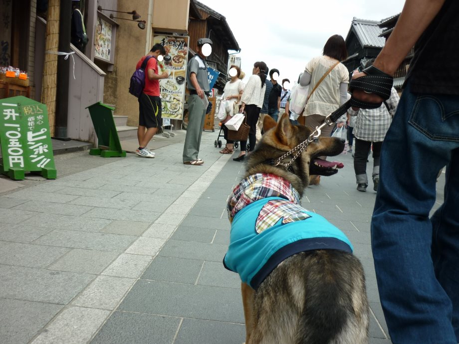 201406伊勢3-02