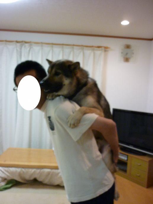 201406おんぶ-06