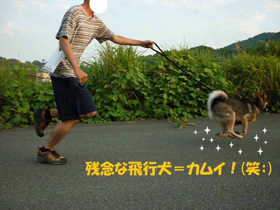 201407残念な飛行犬15