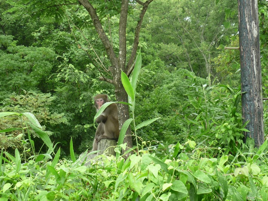 201408三重県民の森1-06