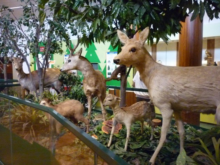 201408三重県民の森1-10