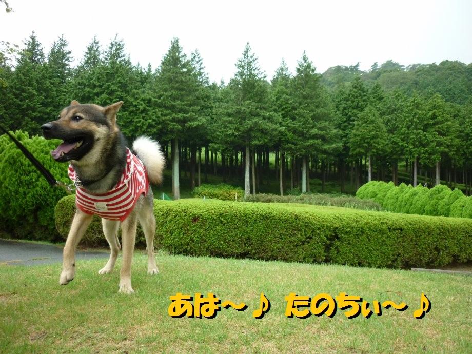 201408三重県民の森2-14