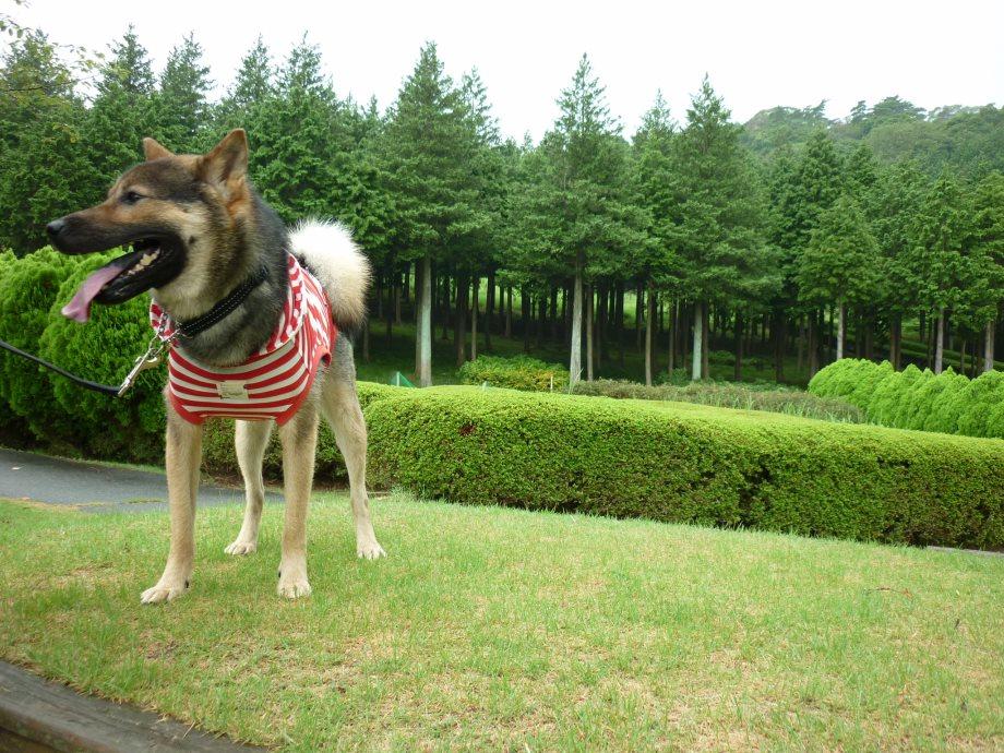 201408三重県民の森2-15